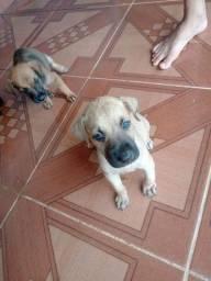 Doação de lindos cachorrinhos