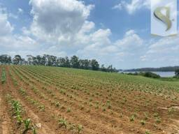 Fazenda- Biritiba Ussu - Mogi das Cruzes -SP