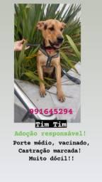 Doação de lindo cãozinho!