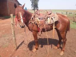 Título do anúncio: Cavalo 1/2 de sangue QUARTO DE MILHA