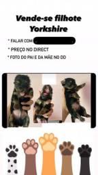 Vende-se dogs