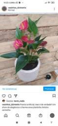 Vasinhos de cimento com ou sem planta