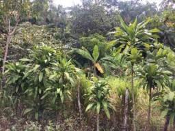 AXIXÁ - Maranhão: VENDO CHÁCARA