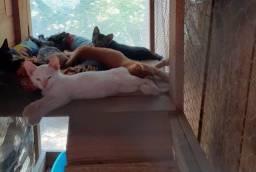 Gatinhos filhotes para adoção responsável