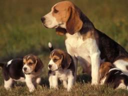 Linda Fêmea de Beagle Black Friday