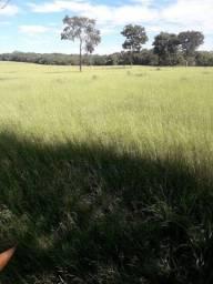 Título do anúncio: Várzea Grande - Fazenda - Jardim Novo Mundo