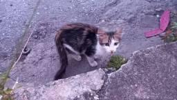 Doação de lindo gatinho tricolor!