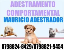 Título do anúncio: Adestramento de Cães