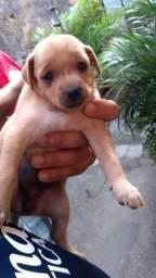 Cachorra picher numero02