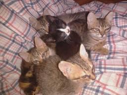 Filhotes de Gatos pra doação
