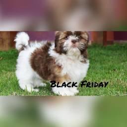 Shih tzu na Black Friday