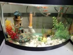 aquário 25 L. vidro curvo . completo ( oportunidade )