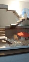Casinha Terrário para hamster