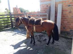 Cavalo cuido