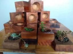 Vasos de madeira plantas suculentas cactus