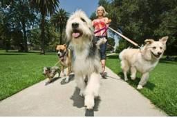 Título do anúncio: Cuido do seu cãozinho com muito amor
