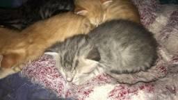 Doação Responsável de Gatinhos