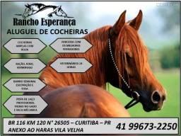 Título do anúncio: Aluguel de cocheiras para seu cavalo