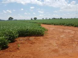 Fazenda de 1.450 alqueires, agricultura (Nogueira Imóveis Rurais)