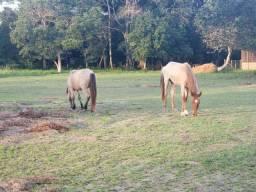 Vendo dois cavalos