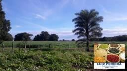 FAZENDA A VENDA EM CAMPOS LINDOS - TO (Agricultura)