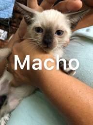 Doação de gatinhos fofínhos