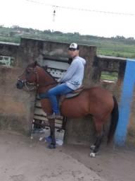 Cavalo de direta caceteiro