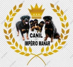 Rottweiler com pedigree cbkc(reservas abertas).