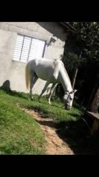 Vende um cavalo