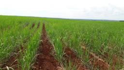 Fazenda para investidores