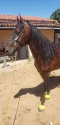 Cavalo de patrão pra pessoas exigentes