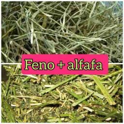Feno Coast Cross + Feno de Alfafa 350g
