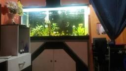 Vendo um aquário de 1.25 de comprimento, 40 de largura e 60 de altura