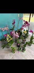 Orquídeas com flor