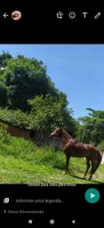Vendo cavalo Kartel sagrado coração