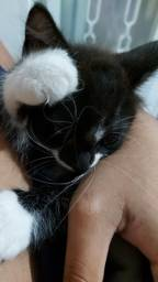 Doação de gatinho