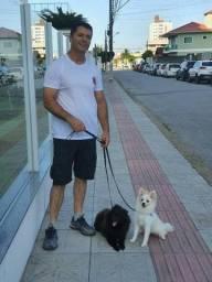 Título do anúncio: Adestramento e psicologia canina