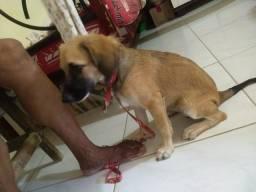 Doação Cachorrinha