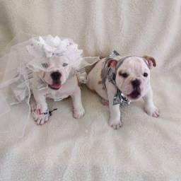 Lindos Filhotes de Bulldog Ingles