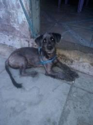 Cachorro pra doação macho 5 meses