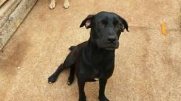 Doa-uma cadela de 9 meses