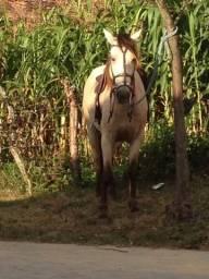 Vendo cavalos potros e éguas