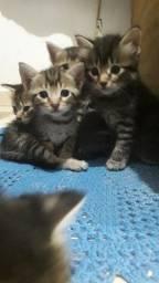 Filhotes de gatos doa-se