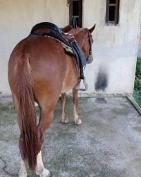 Vendo ou troco égua alaza