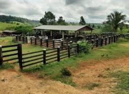 Fazenda no município de Itupiranga-PA 122 Alqueires