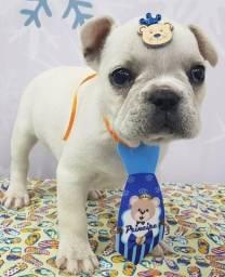 Lindo Bulldog Francês macho / coloração branca / Venha conhece-lo !