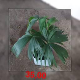 Vendo várias plantas preço na imagem