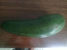 Abacate gigante 5 reais cada