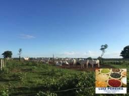 FAZENDA A VENDA EM NIOAQUE - MS - DE 1.250 HECTARES (Pecuária)