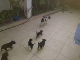 Cães pra adoção